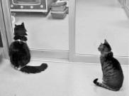 AVHS kitties (2)