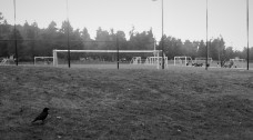 crow and soccer (2)