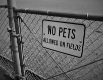 no pets on fields (3)