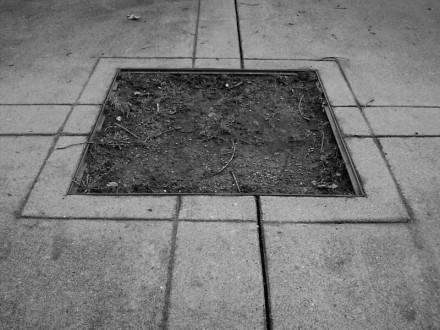planting area (2)