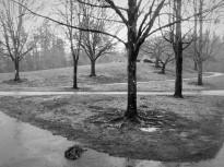 trees in the rain (2)