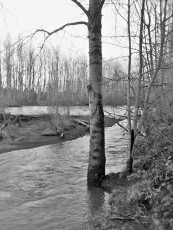 white river (3)