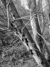 woodpecker holes (2)