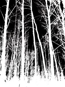 trees inverse